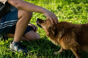 As Temperatures Rise, Dogs Can Lose Their Cool